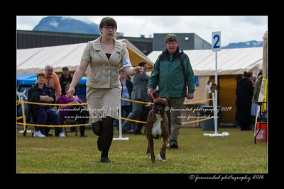 DS5_8997-12x18-06_2016-Dog_Show