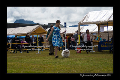 DS5_9038-12x18-06_2016-Dog_Show