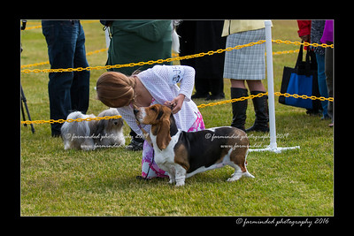 DS5_8982-12x18-06_2016-Dog_Show