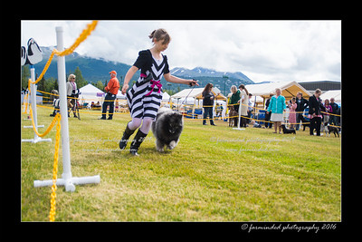 DS5_9078-12x18-06_2016-Dog_Show