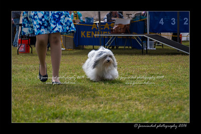 DS5_9044-12x18-06_2016-Dog_Show