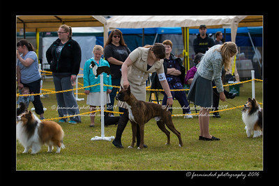 DS5_8989-12x18-06_2016-Dog_Show