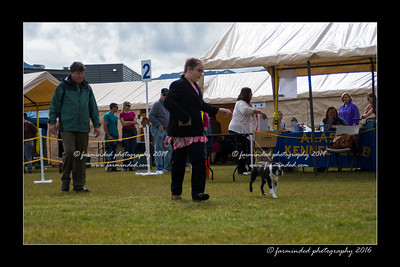 DS5_9101-12x18-06_2016-Dog_Show