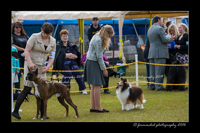 DS5_8991-12x18-06_2016-Dog_Show