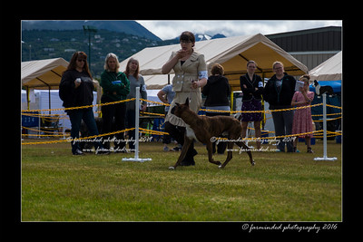 DS5_9062-12x18-06_2016-Dog_Show