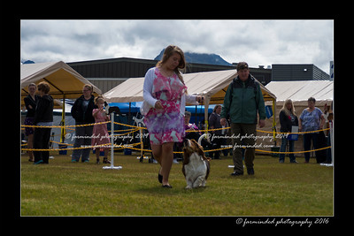 DS5_9049-12x18-06_2016-Dog_Show