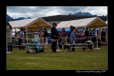 DS5_9075-12x18-06_2016-Dog_Show