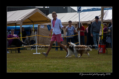 DS5_9067-12x18-06_2016-Dog_Show