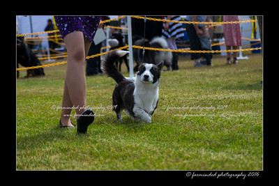 DS5_9122-12x18-06_2016-Dog_Show