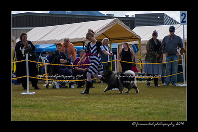DS5_9106-12x18-06_2016-Dog_Show
