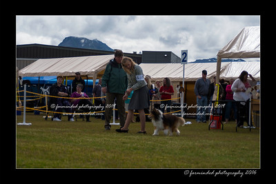 DS5_9003-12x18-06_2016-Dog_Show