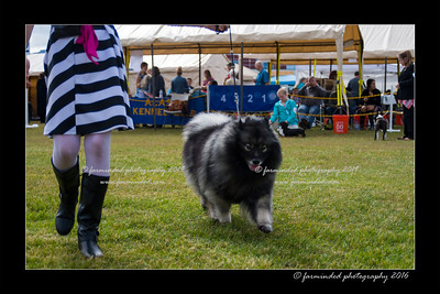 DS5_9090-12x18-06_2016-Dog_Show
