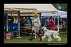 DSC_7116-12x18-06_2015-AKC_DogShow-W