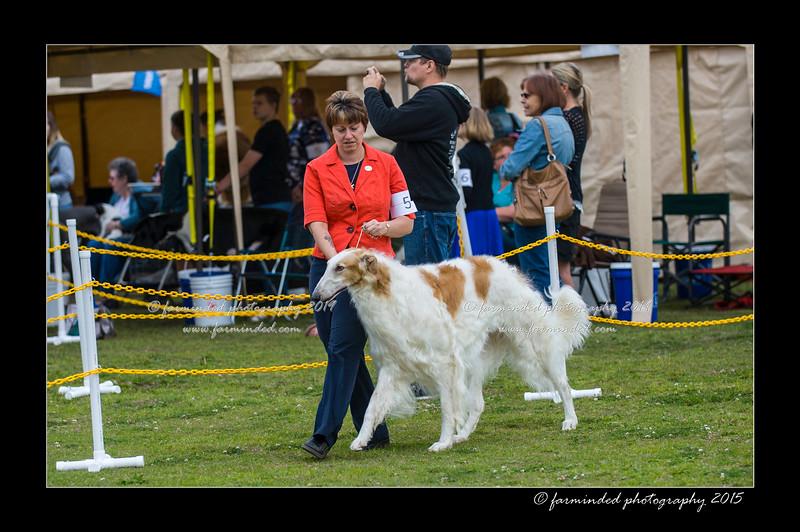 DSC_6938-12x18-06_2015-AKC_DogShow-W