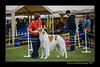 DSC_6940-12x18-06_2015-AKC_DogShow-W