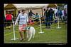 DSC_6967-12x18-06_2015-AKC_DogShow-W