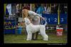 DSC_7119-12x18-06_2015-AKC_DogShow-W