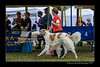 DSC_6944-12x18-06_2015-AKC_DogShow-W