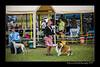 DSC_1102-12x18-06_2015-AKC_DogShow-W