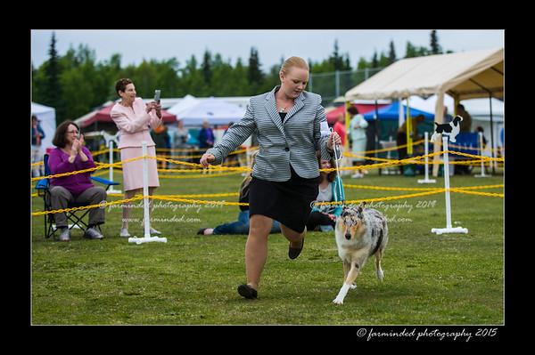 DSC_0003-12x18-06_2015-AKC_DogShow-W