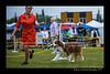 DSC_8286-12x18-06_2015-AKC_DogShow-W