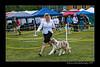 DSC_8276-12x18-06_2015-AKC_DogShow-W