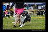 DSC_8278-12x18-06_2015-AKC_DogShow-W
