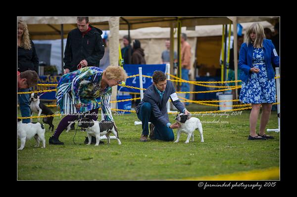 DSC_8099-12x18-06_2015-AKC_DogShow-W