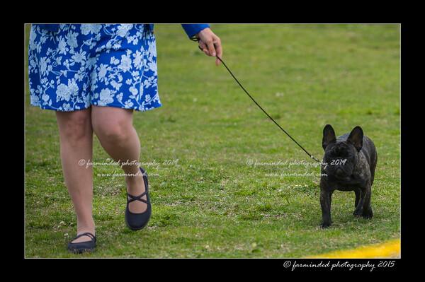 DSC_8081-12x18-06_2015-AKC_DogShow-W