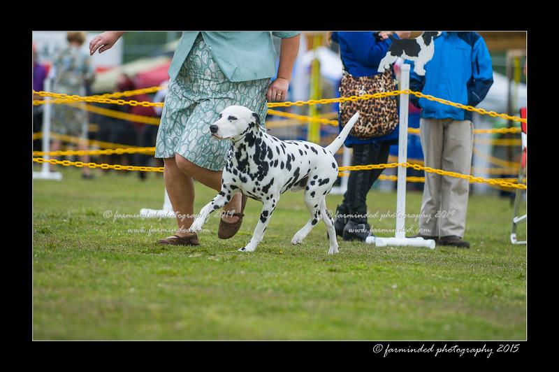 DSC_9718-12x18-06_2015-AKC_DogShow-W