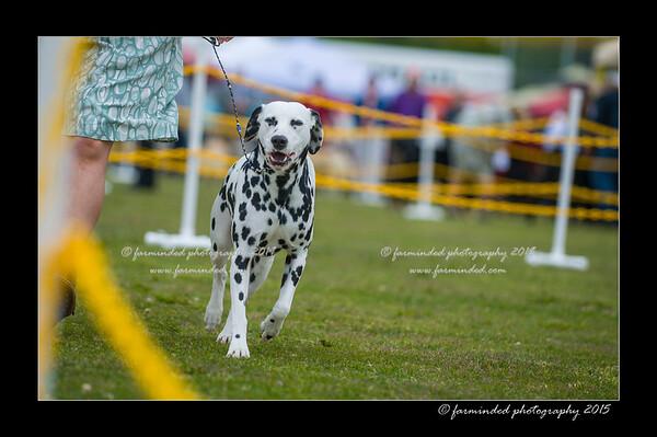 DSC_9723-12x18-06_2015-AKC_DogShow-W