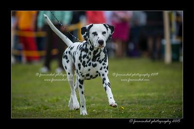 DSC_8470-12x18-06_2015-AKC_DogShow-W