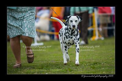 DSC_8468-12x18-06_2015-AKC_DogShow-W