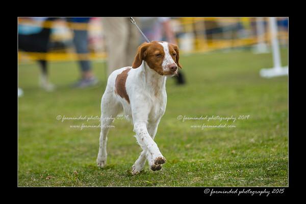 DSC_0578-12x18-06_2015-AKC_DogShow-W
