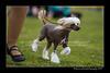 DSC_0090-12x18-06_2015-AKC_DogShow-W