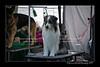 DSC_0033-12x18-06_2014-DogShow-W