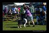 DSC_0320-12x18-06_2014-DogShow-W