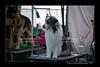 DSC_0034-12x18-06_2014-DogShow-W