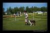 DSC_0313-12x18-06_2014-DogShow-W