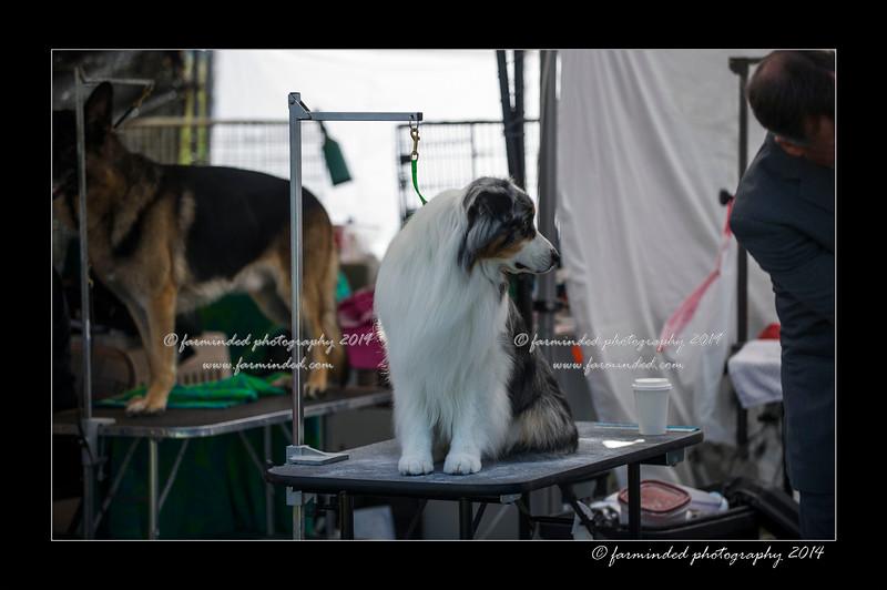 DSC_0032-12x18-06_2014-DogShow-W