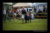 DSC_2130-12x18-06_2014-DogShow-W