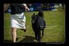 DSC_1826-12x18-06_2014-DogShow-W