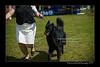 DSC_1827-12x18-06_2014-DogShow-W