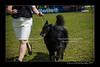 DSC_1828-12x18-06_2014-DogShow-W