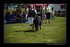 DSC_1823-12x18-06_2014-DogShow-W