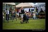 DSC_2131-12x18-06_2014-DogShow-W