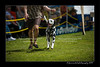 DSC_2340-12x18-06_2014-DogShow-W