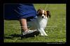 DSC_0714-12x18-06_2014-DogShow-W