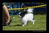 DSC_0723-12x18-06_2014-DogShow-W