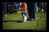 DSC_0760-12x18-06_2014-DogShow-W